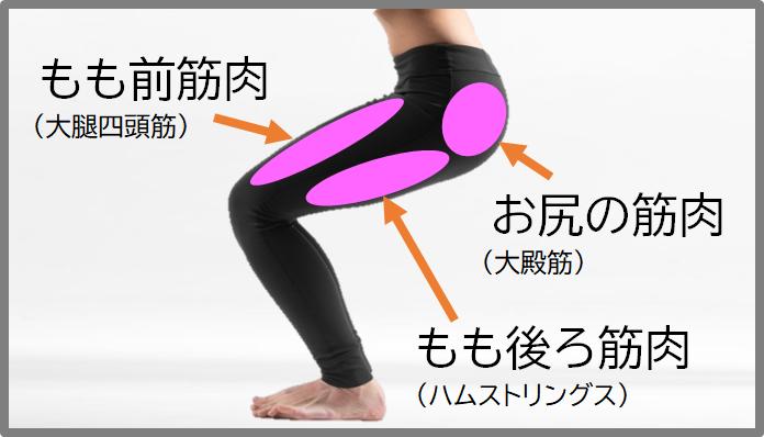 スクワットの筋肉